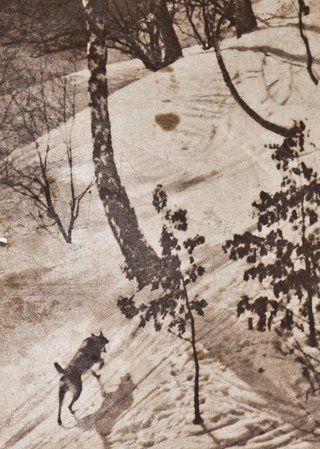 """Policyjny pies """"Echo"""" podczas poszukiwań kolejnych części ciała ofiary z Parku Kilińskiego. Na zdjęciu fragment okładki tygodnika """"Dajny Detektyw"""", który szeroko opisywał sprawę lwowskiego morderstwa."""
