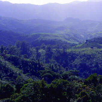 Madagaskar może poszczycić się pięknymi krajobrazami. Niestety, ziemia jest tam nieurodzajna a klimat nie sprzyja europejczykom. (fot. MAURO Didier; lic. CC ASA 3.0).