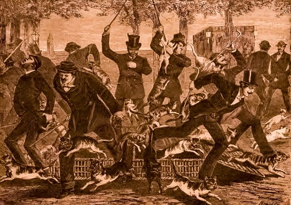 A tym razem coś poszło zdecydowanie nie tak... koty zamiast do wyścigu rzuciły się na własnych sędziów i poganiaczy! (Nowy Czas 1883).