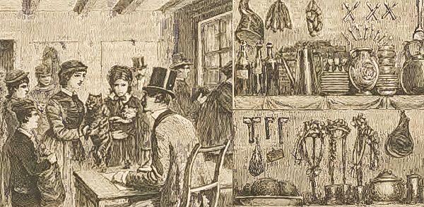 Jak na postępowych Belgów przystało, sport był egalitarny. Kobiety też mogły wystawiać zawodników. A kotki - ścigać się z kocurami (Nowy Czas 1883).