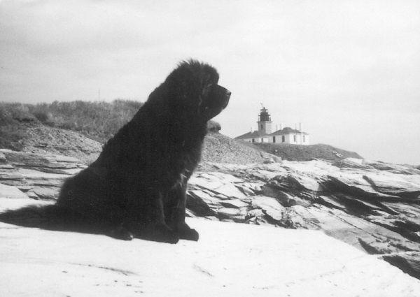 Nowofundland o imieniu Rigel. Pies wyskoczył z idącego na dno Titanica i płynął obok szalupy głosno szczekając, co zwróciło uwagę załogi idącej z ratunkiem jednostki.