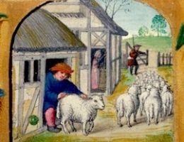 sredniowieczna owca