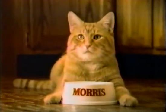 Morris II - kot, który omal nie został kandydatem na prezydenta USA. Na zdjęciu kadr z jeden z reklam, których Morris był gwiazdą.