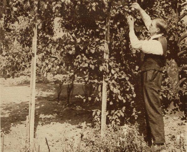 """""""Słodkie owoce jesieni"""". Okładka Światowida z września 1926 roku."""