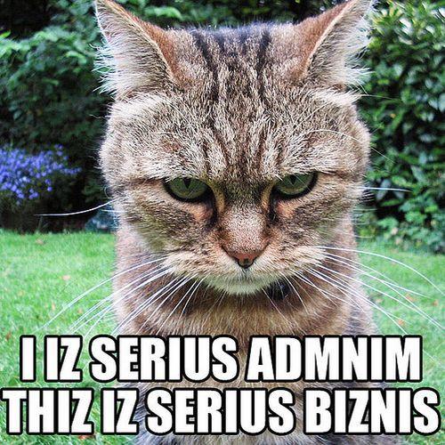 Rozwiązanie konkursu: Koty. Czworonożni królowie Internetu (autor.: pfctdayelise; lic. CC ASA 2.0).