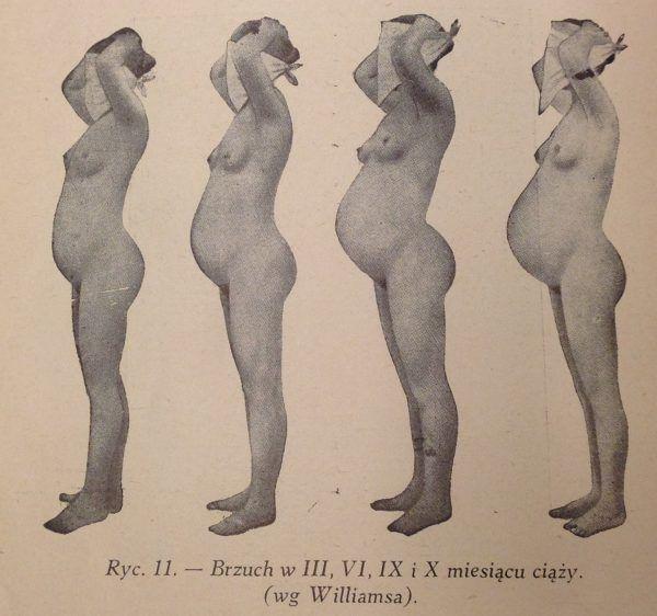 """Nawet dla najbardziej postępowych specjalistów seks był przede wszystkim środkiem na drodze do celu - ciąży. Ilustracja z """"Encyklopedii życia seksualnego"""" (1937)."""