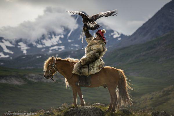 Jak zdobyć pożywienie, jeśli nie potrafisz polować z orłem przednim? (fot. David Baxendale, CC BY-ND 2.0).