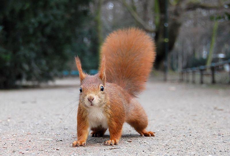 Podobno CIA już w 1967 r. zarzuciła projekt wykorzystania kotów jako agentów, ale kto wie może teraz to wiewiórki zajęły ich miejsce? (fot. Ray eye; lic. CC ASA 2.0).