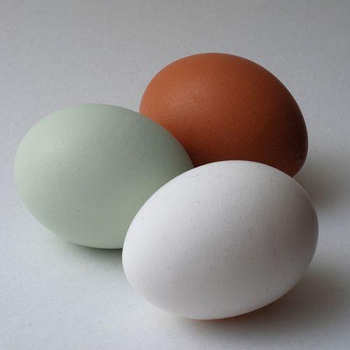 Te jaja można spokojnie pokazać, nawet w Afganistanie (źródło: domena publiczna).