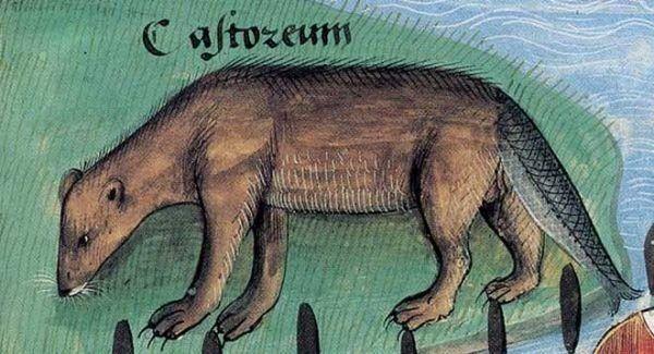 W czasie postu chętnie jadano ryby. Zaliczano do nich także bobry, a w szczególności ich rybopodobne ogony.
