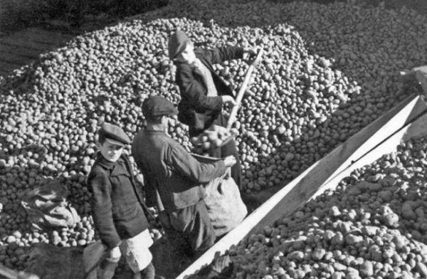 Czasem ziemniaków było całe mnóstwo, innym razem trzeba było zużyć nawet ostatnie obierki.