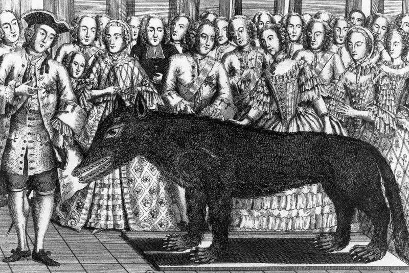Francuski dwór podczas przyglądania się wypchanej bestii. Jakoś nie we wszystkich stwór wzbudził przerażenie... (źródło: domena publiczna).