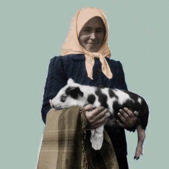 Wiejska handlarka z prosiakiem. Wierzpowinę, w przeciwieństwie do mięsa króliczego ciężko było podrobić. (1940 rok, zdjęcie zrobione przez fotoreportera gadzinowego Wydawnictwa Prasowe Kraków-Warszawa)