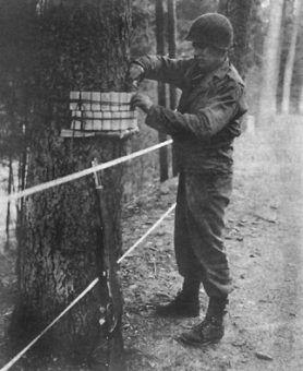 Amerykański saper zakłada ładunki wybuchowe na pniu drzewa (fot. ze zbiorów US Army Center for Military History, domena publiczna).