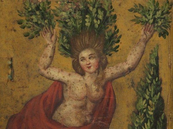 Wawrzyn, dziś stosowany głównie jako przyprawa, należał w XVII wieku do najpopularniejszych roślin wywołujących poronienia i menstruacje. Na miniaturze z zielnika Georga Andreasa Helwinga z początków XVIII wieku widzimy Dafne przemieniająca się w drzewo laurowe (źródło: Biblioteka Narodowa, domena publiczna).