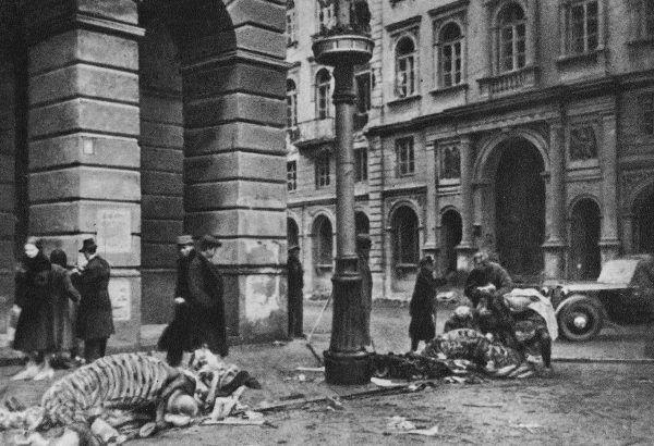 W okupowanej Polsce końskie mięso, nawet już gnijące, było rarytasem. Na fotografii: szkielety koni na ul. Nowy Świat we wrześniu 1939 roku w Warszawie. Mięso już dawno zjedzone... (źródło: domena publiczna).