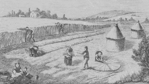Pracując na polu feudała pańszczyźniani chłopi jak tylko mogli migali się od pracy (źródło: domena publiczna).