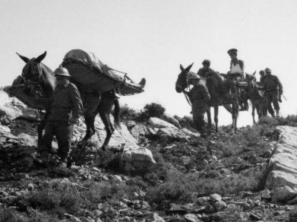 Brytyjska Służba Medyczna podczas II wojny światowej w górskich terenach mułami stała. Zdjęcie z archiwum Imperial War Museums (źródło: domena publiczna).