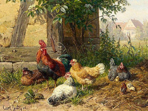 Myrtle zdecydowanie wybiła się ponad przedstawicielki swej rasy, zaprzeczając tezie, że kury to nieloty. Obraz Carla Jurtza z 1899 roku (źródło: domena publiczna).