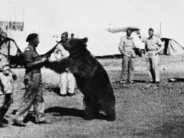 Ulubionym sportem Wojtka były zapasy z polskimi żołnierzami. Ale lubił też w specyficzny sposób pomagać im w podrywie...