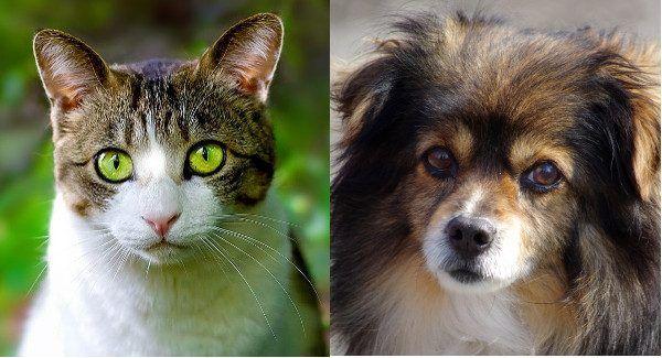"""By udowodnić teorię swojej mentorki, Szipacz usiłował """"hodować"""" rośliny w brzuchach kotów i psów (zdjęcie po lewej: domena publiczna, zdjęcie po prawej: Jakub Hałun, CC BY-SA 4.0)."""