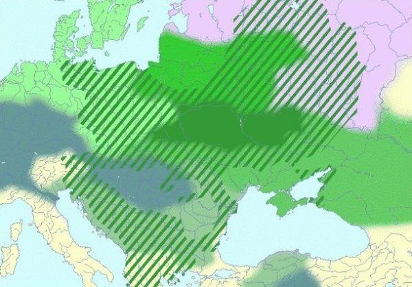 """Słowiańskie imperium miało obejmować """"ziemie historycznie i etnograficznie słowiańskie, na których kiedykolwiek stanęła stopa Słowianina"""". Na mapie ciemnozielonym kolorem zaznaczona jest (hipotetyczna) kolebka Słowian, a paskami w tym samym kolorze - ich ekspansja w pierwszym tysiącleciu naszej ery (źródło: wikimedia commons, domena publiczna)."""