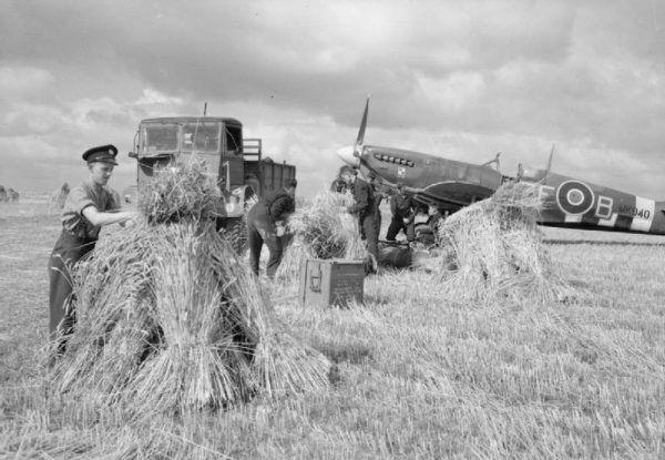 """""""Ludzie niższej rasy"""" z dywizjonu 308 podczas zbierania w Normandii pszenicy do przygotowania lądowiska (fot. Clark N S, Imperial War Museums, domena publiczna)."""