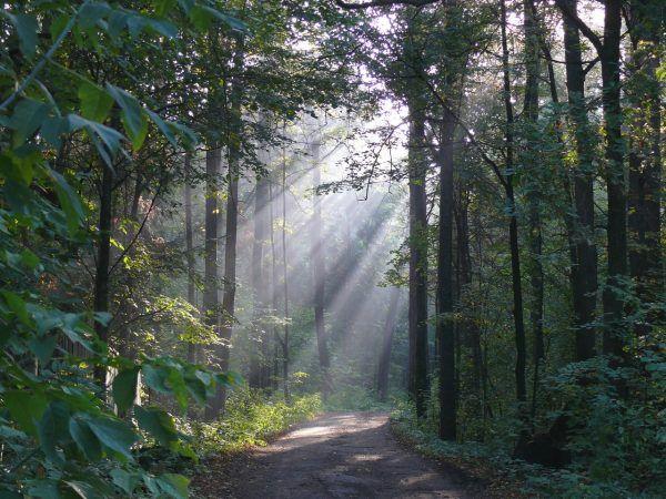 Maryjscy rodzimowiercy modlą się głównie wśród drzew, w świętych gajach. Na zdjęciu las dębowy niedaleko stolicy republiki, Joszkar-Oły (zdj. Badanovalexandr, lic. CC BY-SA 4.0).