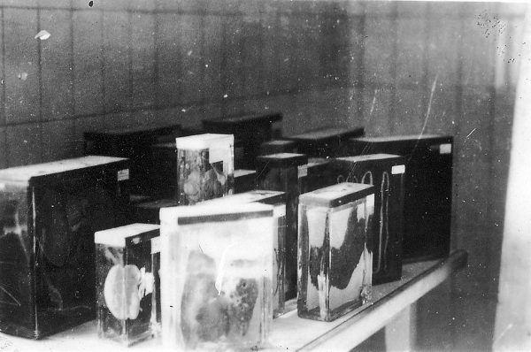 """Organy więźniów obozu w Buchenwaldzie z """"kolecji"""" Ilse Koch. Zdjęcie wykonane po wyzwoleniu obozu (fot. Jules Rouard; lic. CC BY-SA 3.0)."""