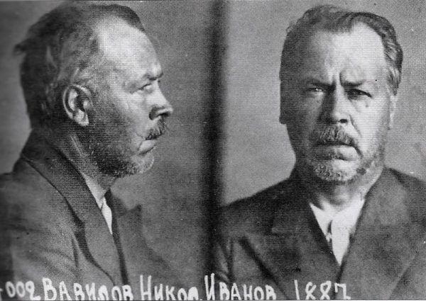 """Nikołaj Wawiłow po aresztowaniu przez NKWD w 1940 roku. Biolog i genetyk, chociaż wsławił się swoimi badaniami, skończył podobnie jak inni rosyjscy naukowcy. Wraz z rządzami """"czerwonego cara"""" na piedestał świata nauki wysunęli się szaleńcy i szarlatani."""