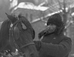 Dorożkarz trzymający konia za uzdę. (fot. domena publiczna)