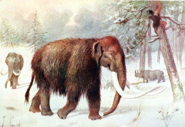 Mamut Włochaty, autor Joseph Smith (fot. domena publiczna).