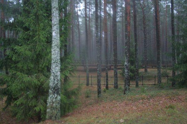 Henryk Troszczyński wspomina las katyński jako ciemny i nieprzyjazny. Powyżej zdjęcie lasu z 2013 roku.