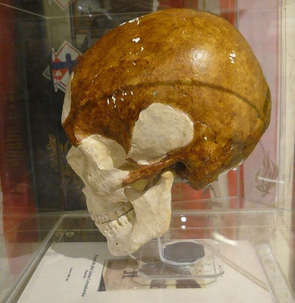 Model czaszki należącej do Janiny Lewandowskiej. Obecnie znajduje się w zbiorach Muzeum Powstańców Wielkopolskich w Lusowie.