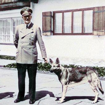 Adolf Hitler z suczką Blondi.