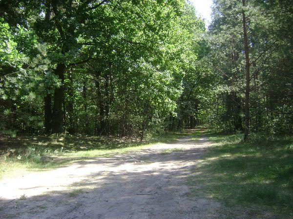 """Ciała """"Postka"""" i """"Maksa"""" zostały znalezione w Chojnowskim Parku Krajobrazowym."""