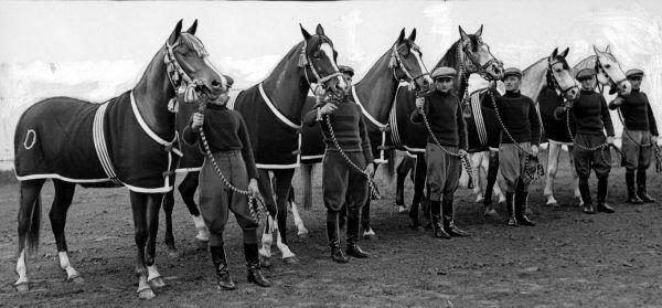 Prezentacja polskich koni krwi arabskiej. Fotografia z 1937 roku
