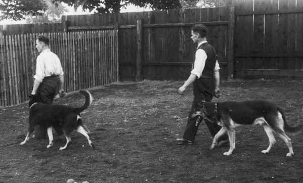 Szkoła tresury psów w Katowicach. Fotografia z 1937 roku