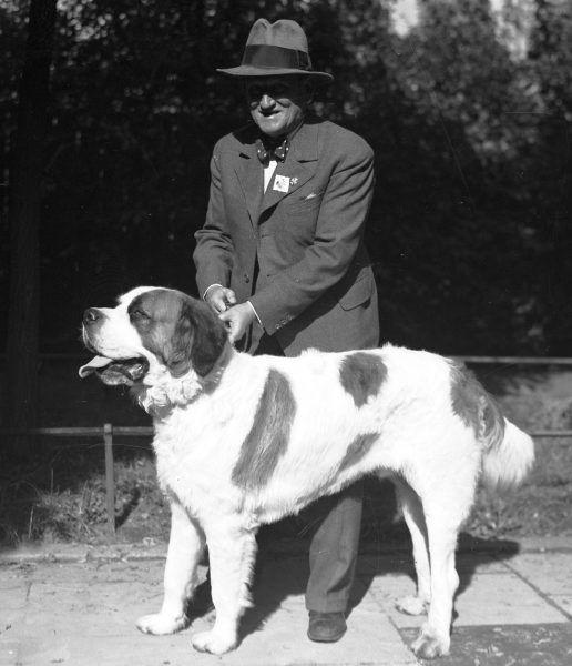 Wystawa psów w Krakowie. Bernardyn z właścicielem. Fotografia z 1935 roku