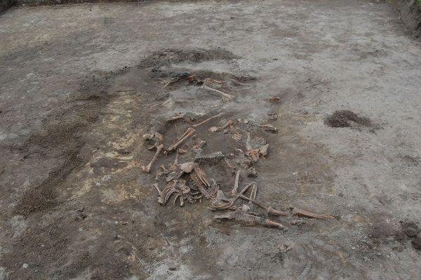 Masowy grób odkryty w trakcie ekshumacji ofiar rzezi wołyńskiej w Woli Ostrowieckiej (fot. Leon Popek, lic. CC BY-SA 3.0)