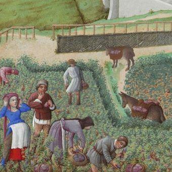 Życie średniowiecznych wieśniaków miało swoje zalety. Jakie?
