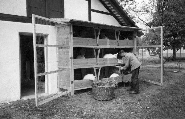 """Przykładowe klatki, w których hodowano króliki. Zdjęcie pochodzi z książki """"Okupacja od kuchni"""" autorstwa Aleksandry Zaprutko - Janickiej."""