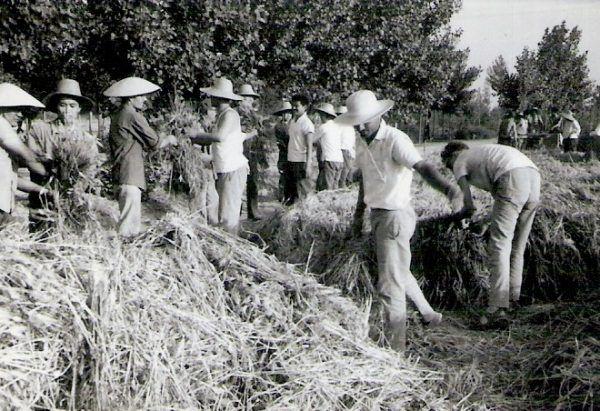 Rewolucja kulturalna dotknęła nie tylko mieszkańców większych miast, ale także ludność prowincji, Na zdjęciu chińscy farmerzy w czasie rewolucji.