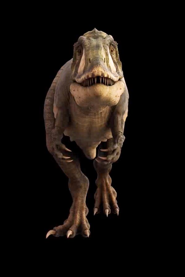 Karcharodontozaur miał silniejsze zęby niż współczesny rekin ludojad. Z łatwością rozszarpywał upolowany obiad.
