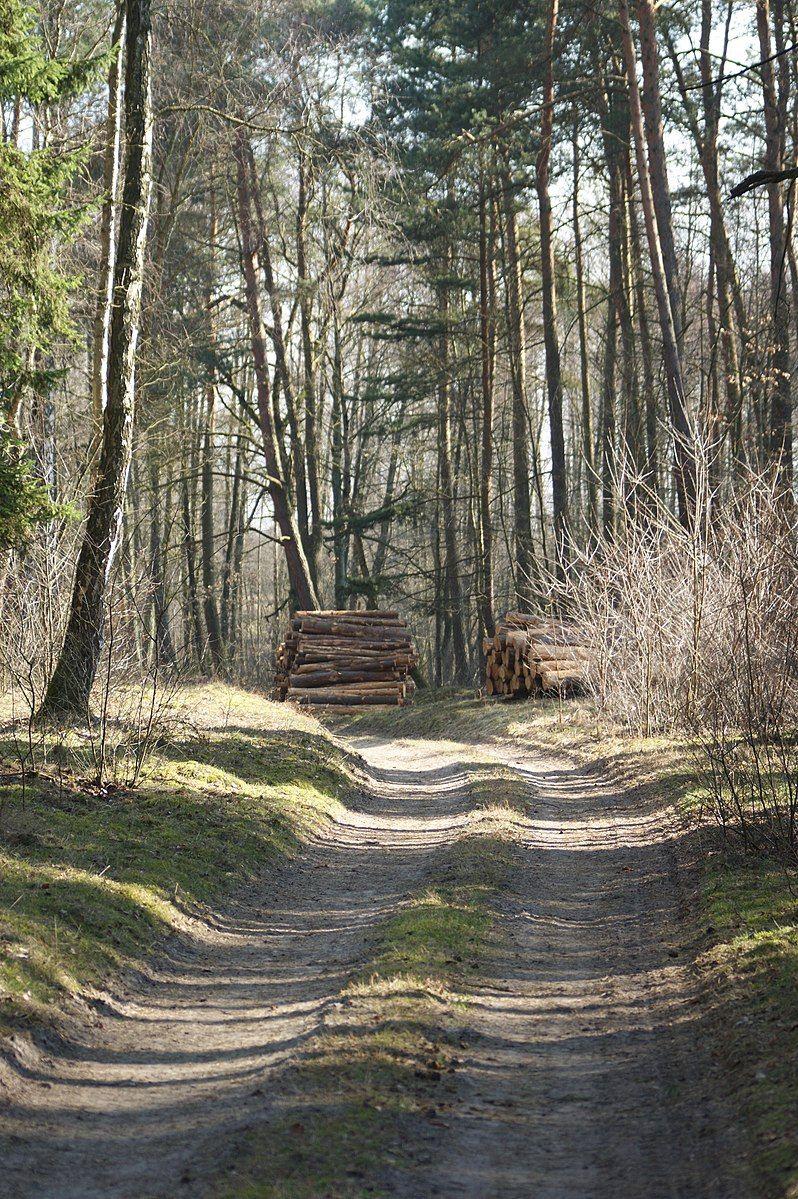 Leśny dukt na współczesnej-fotografii. W średniowieczu trakty rzadko kiedy były tak-wyjeżdżone