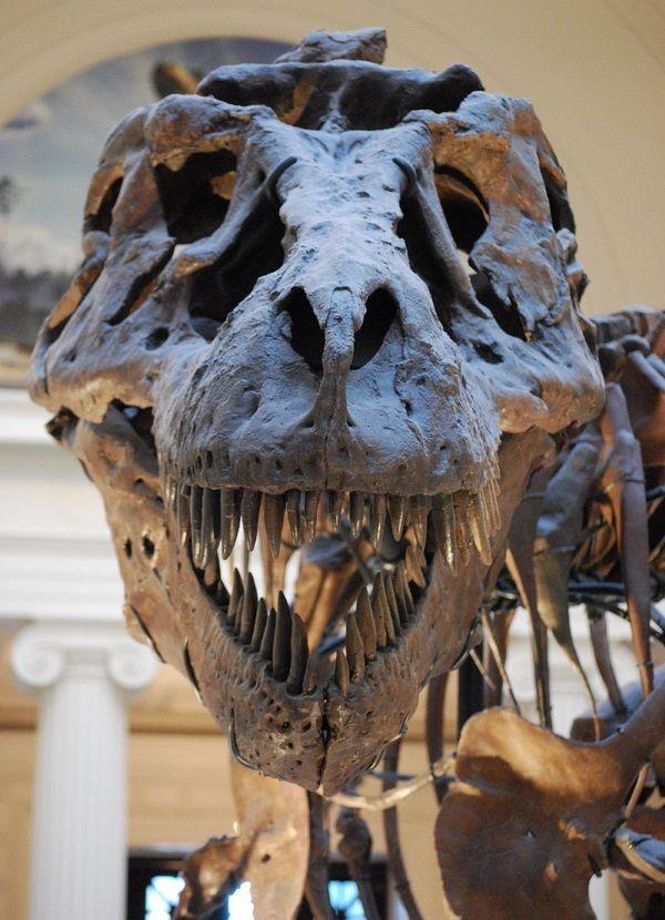 Najbardziej krwiożerczym dinozaur był tyranozaurus, który umiał roztrzaskać kości swej ofiary swoją olbrzymią głową.