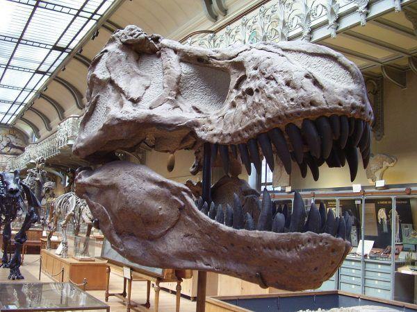 Tyranozaur miał szczękę pełną ostrych jak brzytwa zębów.