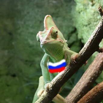 Kameleon (fot. Pit1233, lic. CC0; flaga rosyjska - redakcja)