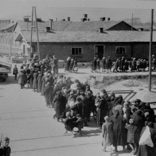 Do Argentyny trafiło złoto i inne cenne kruszce zrabowane ofiarom obozów śmierci. Na zdjęciu Żydzi po przybyciu do Auschwitz, idący w stronę komory gazowej.