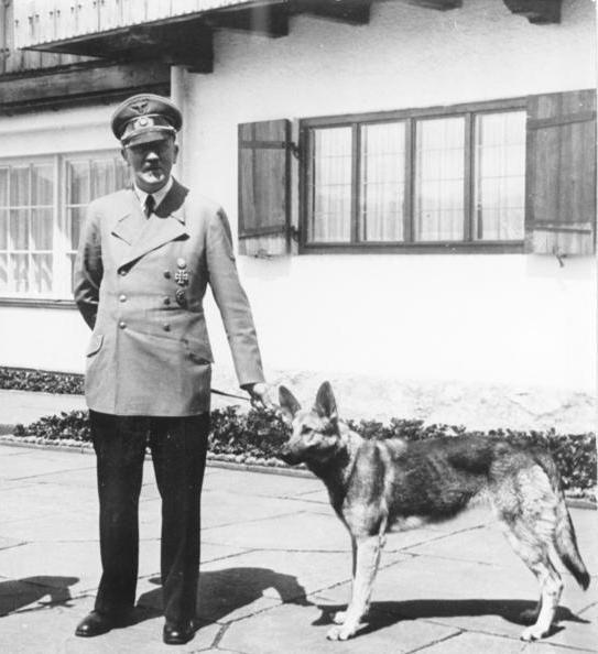 Hitler bardziej od ludzi w swoim otoczeniu kochał swojego owczarka niemieckiego, Blondie. Czy to miłość do zwierząt skłoniła go do przejścia na wegetarianizm?